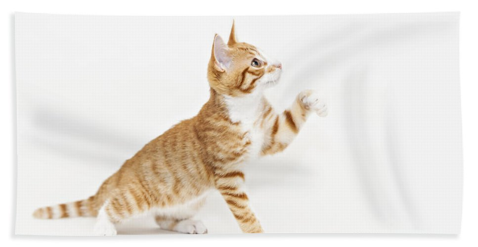 Kitten Bath Sheet featuring the photograph Ginger Kitten Waving Its Paw by Sophie McAulay