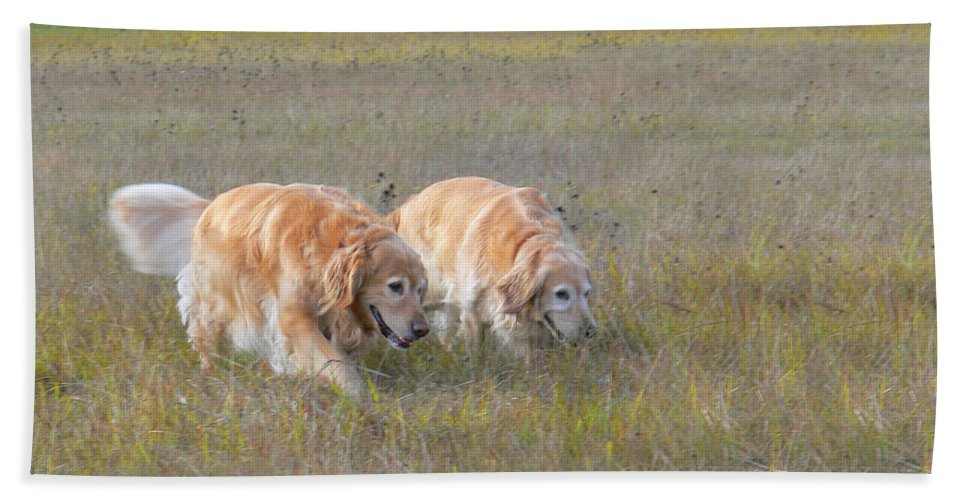 Golden Retriever Hand Towel featuring the photograph Golden Retriever Dogs On The Hunt by Jennie Marie Schell
