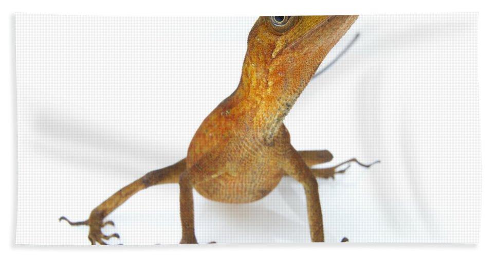 Feb0514 Bath Towel featuring the photograph Goldenscale Anole Suriname by Piotr Naskrecki