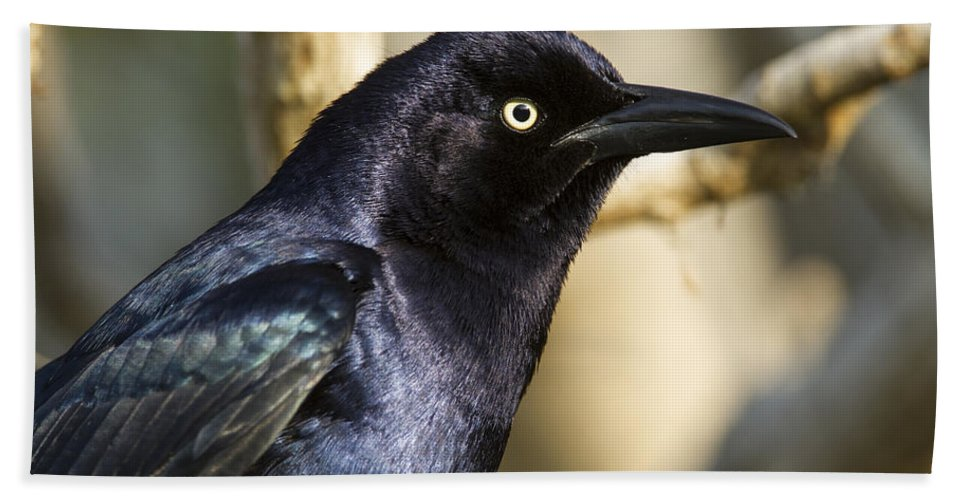 Doug Lloyd Hand Towel featuring the photograph Grackle by Doug Lloyd