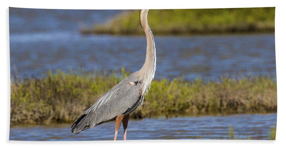 Doug Lloyd Bath Sheet featuring the photograph Great Blue Heron by Doug Lloyd
