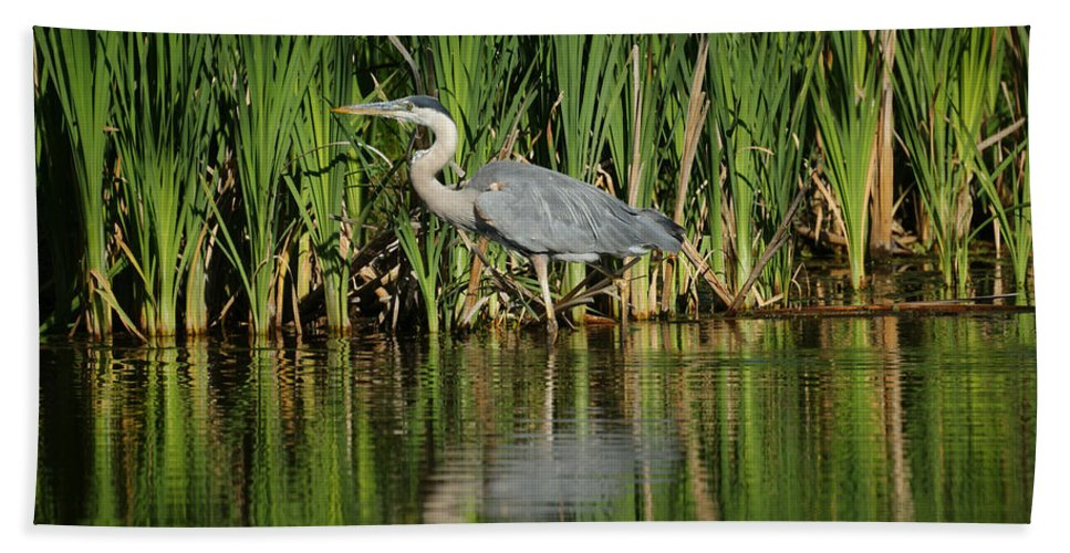 Animals Hand Towel featuring the photograph Great Blue Heron by Ernie Echols