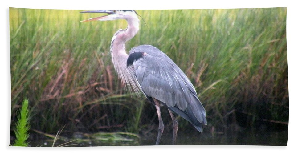 Heron Hand Towel featuring the photograph Great Blue Heron by Kim Bemis