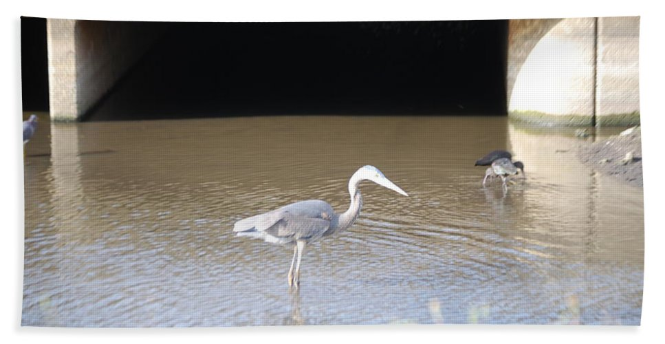 Group Feeding Hole. Florida Hand Towel featuring the photograph Great Blue Heron by Robert Floyd