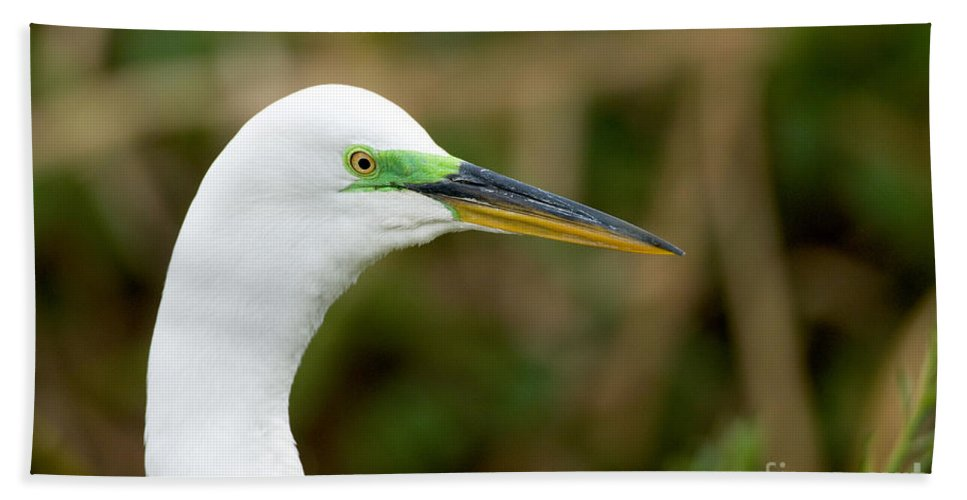 Portrait Hand Towel featuring the photograph Great Egret by Anthony Mercieca