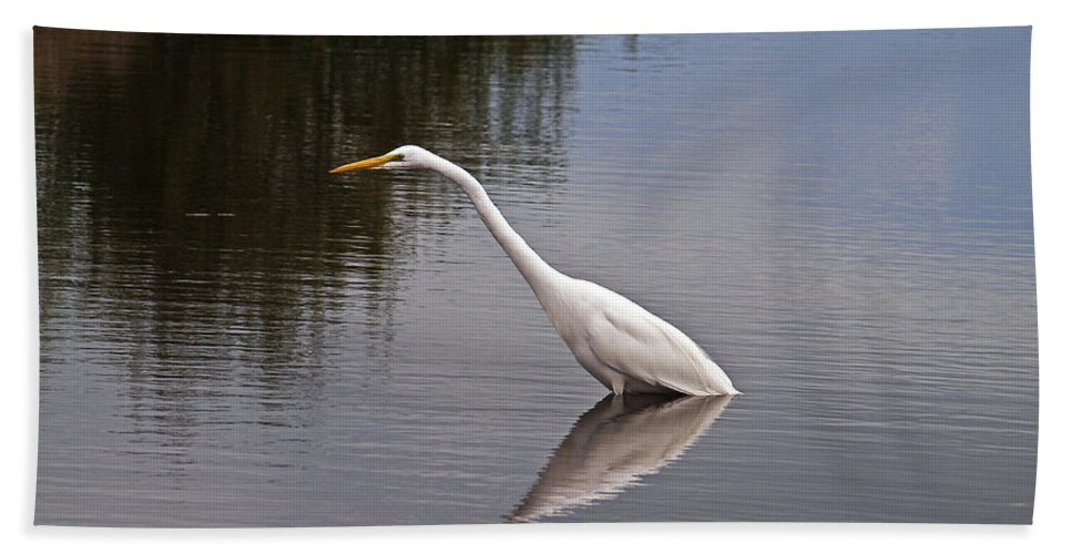 America Hand Towel featuring the photograph Great Egret by Howard Stapleton