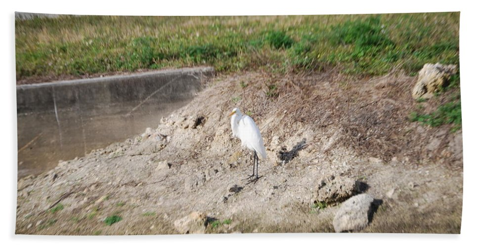 Standing Guard Hand Towel featuring the photograph Great White Heron by Robert Floyd