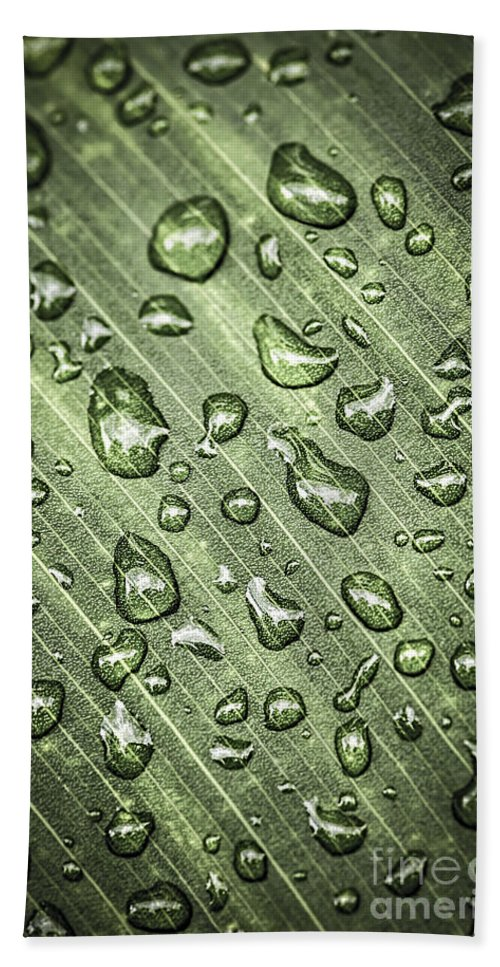 Plant Hand Towel featuring the photograph Green Leaf With Raindrops by Elena Elisseeva