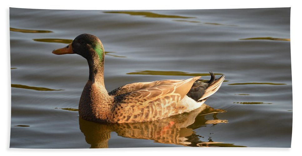 Green Winged Teal Hand Towel featuring the photograph Green Winged Teal by Linda Kerkau