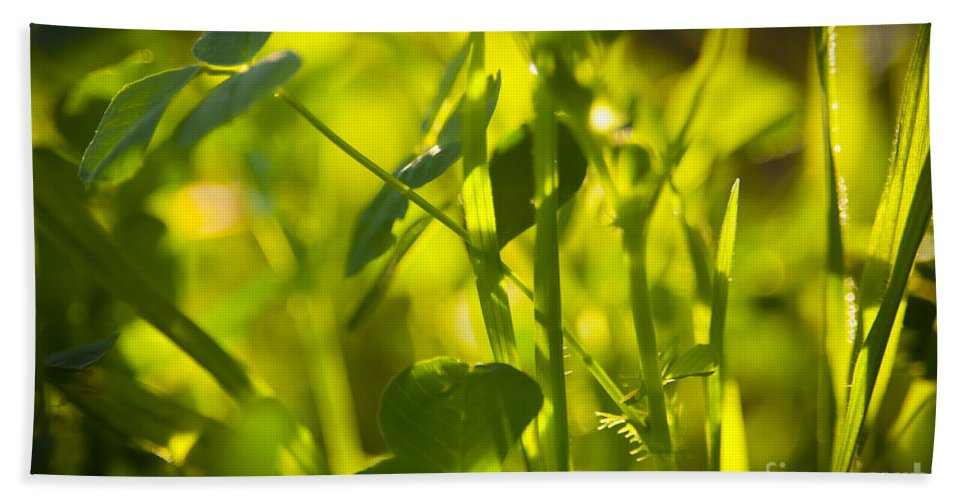 Abstract Hand Towel featuring the photograph Greenery by Tim Hester