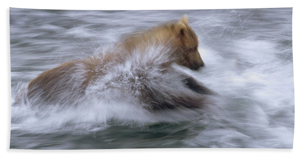 Alaska Hand Towel featuring the photograph Grizzly Bear Chasing Fish by Matthias Breiter