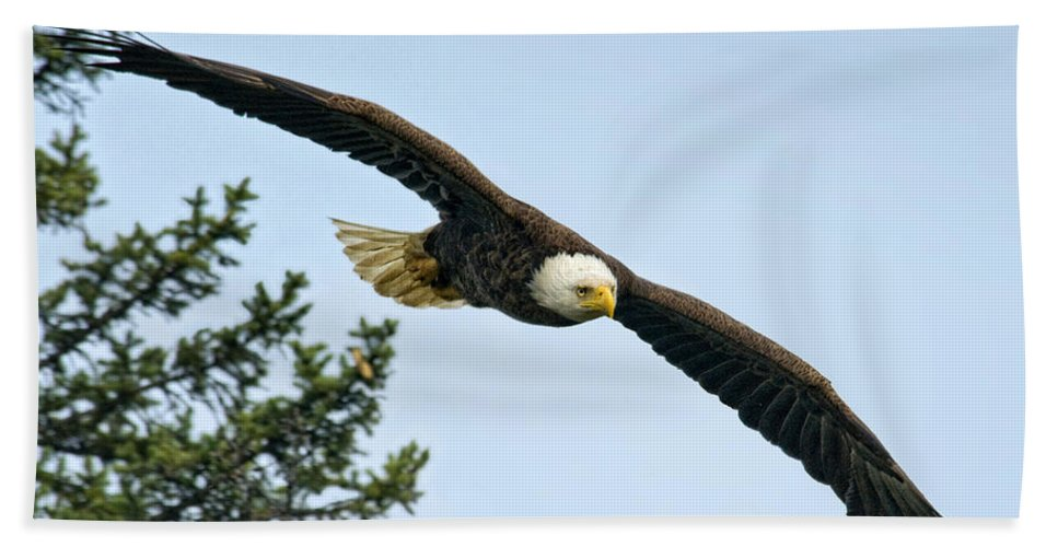 Eagles Hand Towel featuring the photograph Heading Out by Claudia Kuhn