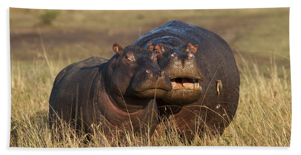 Africa Bath Sheet featuring the photograph Hippo Cow And Calf by John Shaw