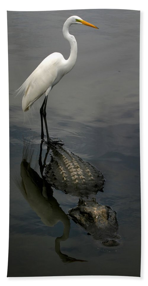 Alligator Bath Towel featuring the photograph Hitch Hiker by Anthony Jones