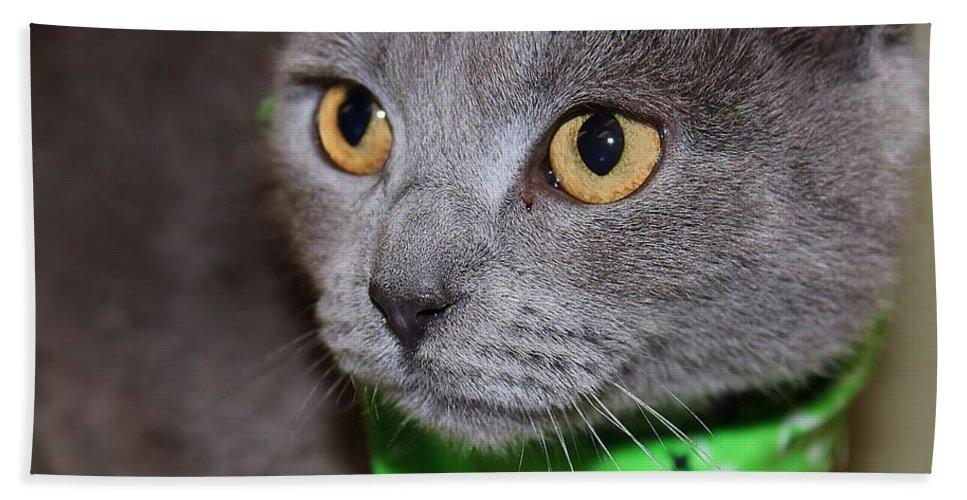 Cat Bath Sheet featuring the photograph I Love You by Joyce Baldassarre