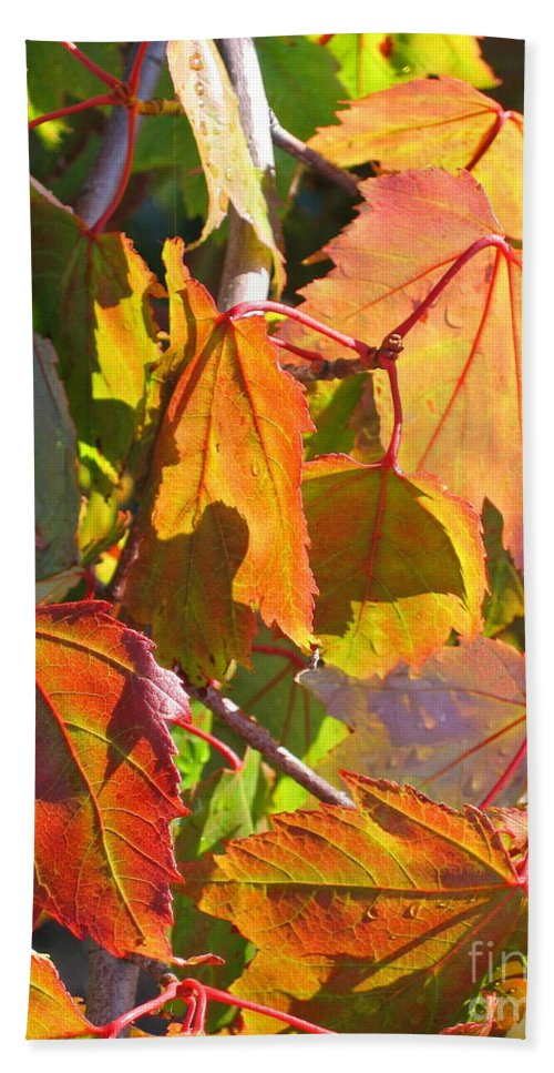 Autumn Hand Towel featuring the photograph Illumining Autumn by Ann Horn