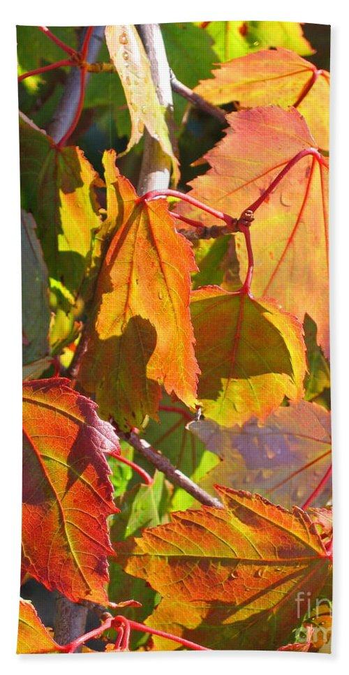 Autumn Bath Towel featuring the photograph Illumining Autumn by Ann Horn