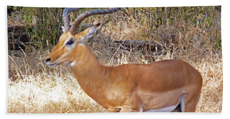 Antelope Bath Sheet featuring the photograph Impala by Tony Murtagh
