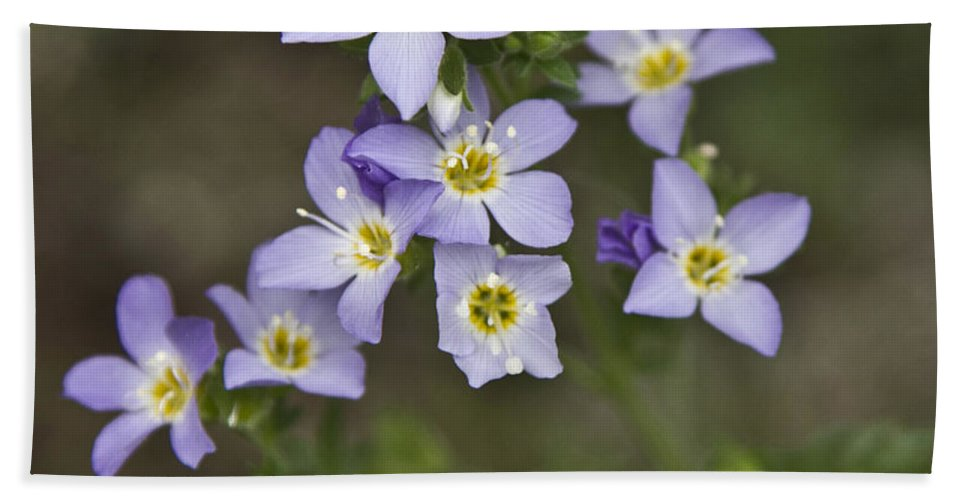 Forget-me-not Hand Towel featuring the photograph Jacob's Ladder by Dee Carpenter
