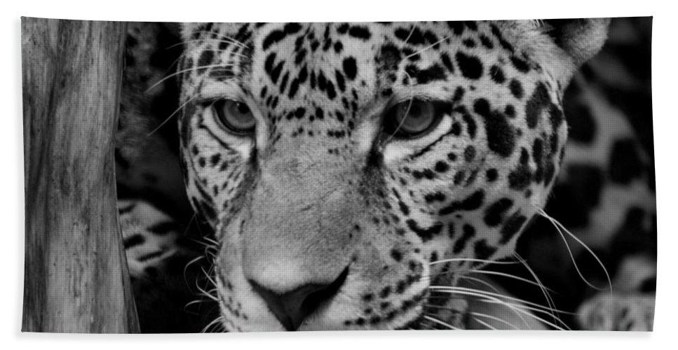 Jaguar Hand Towel featuring the photograph Jaguar In Black And White II by Sandy Keeton