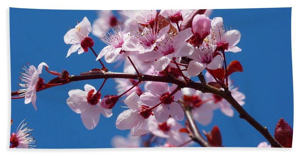 Japanese Cherry Tree Bath Sheet featuring the photograph Japanese Cherry Tree by Gallery Of Modern Art