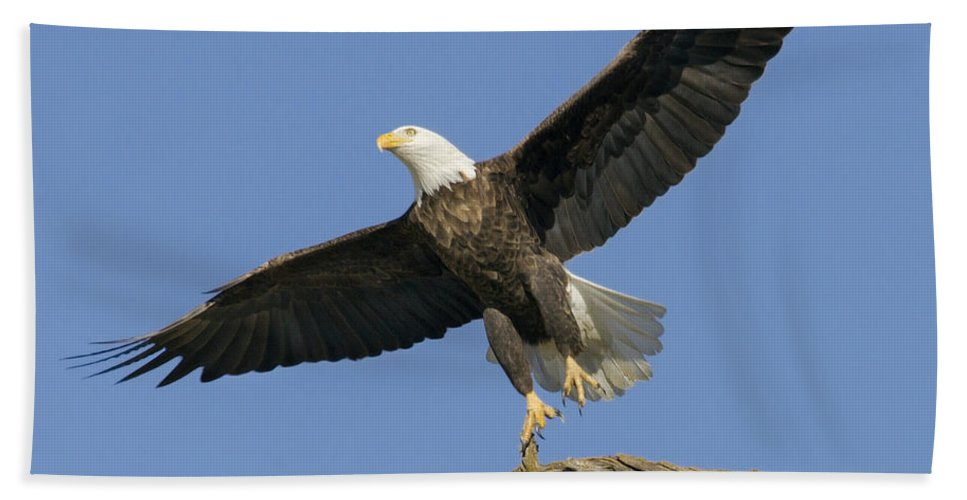 Eagle Bath Sheet featuring the photograph King Of The Sky 3 by David Lester