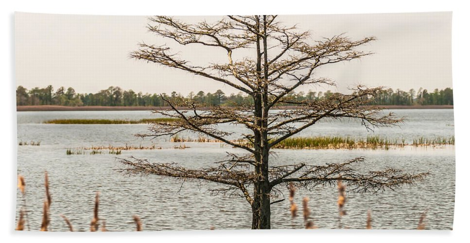 Cypress Hand Towel featuring the photograph Lake Mattamuskeet Nature Trees And Lants In Spring Time by Alex Grichenko