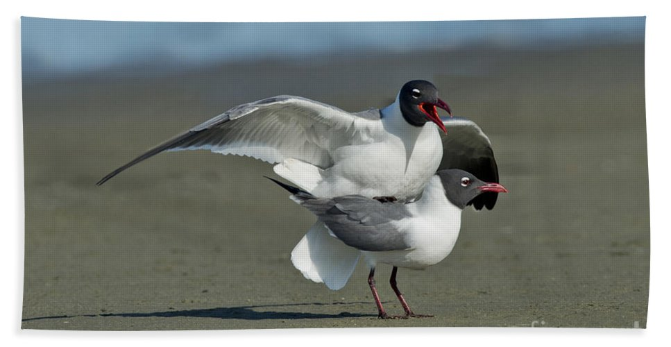 Laughing Gull Hand Towel featuring the photograph Laughing Gulls by Anthony Mercieca