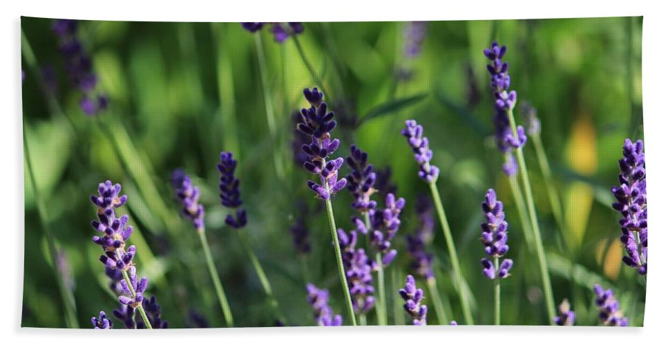 Purple Hand Towel featuring the photograph Lavender by Michael Saunders