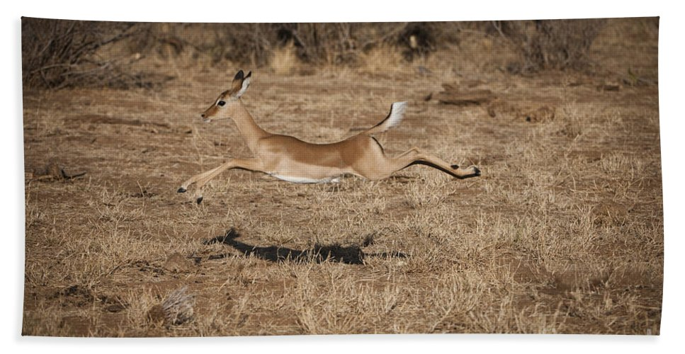 Aepycetos Melampus Bath Sheet featuring the photograph Leaping Impala by John Shaw