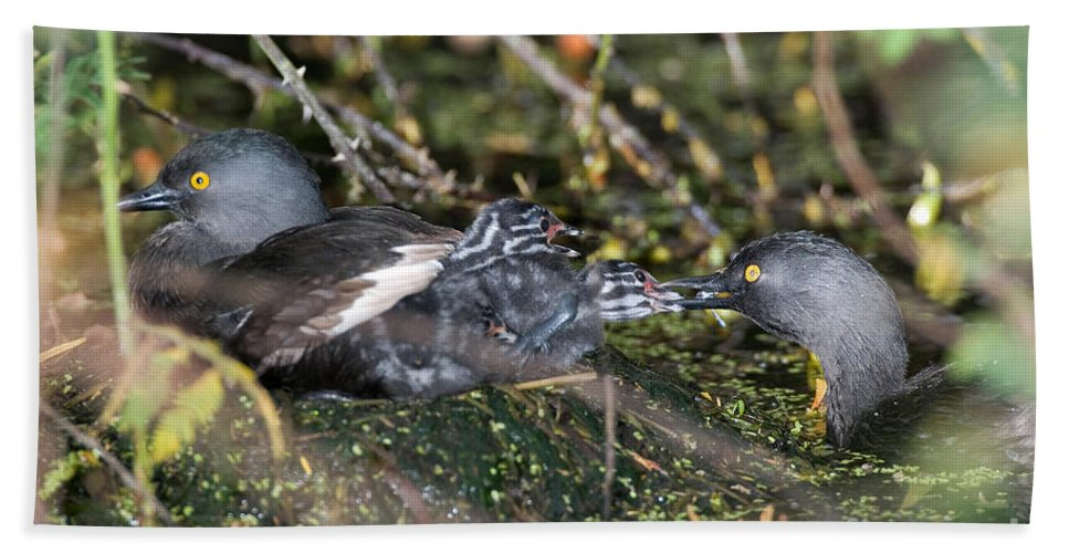 Fauna Hand Towel featuring the photograph Least Grebe by Anthony Mercieca