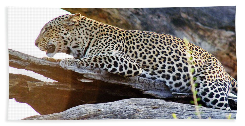 Leopard Hand Towel featuring the photograph Leopard by Tony Murtagh