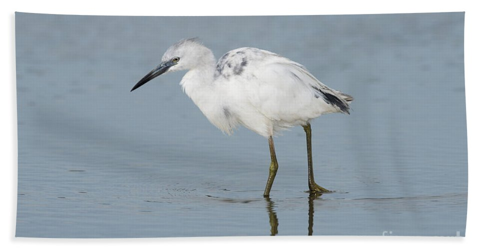 Little Blue Heron Hand Towel featuring the photograph Little Blue Heron by Anthony Mercieca