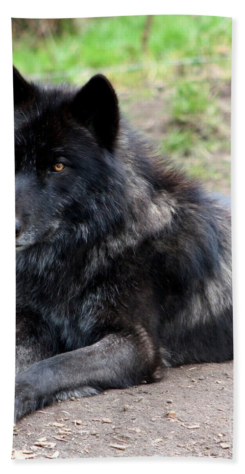 Wolf Hand Towel featuring the photograph Lone Wolf by Nick Gustafson