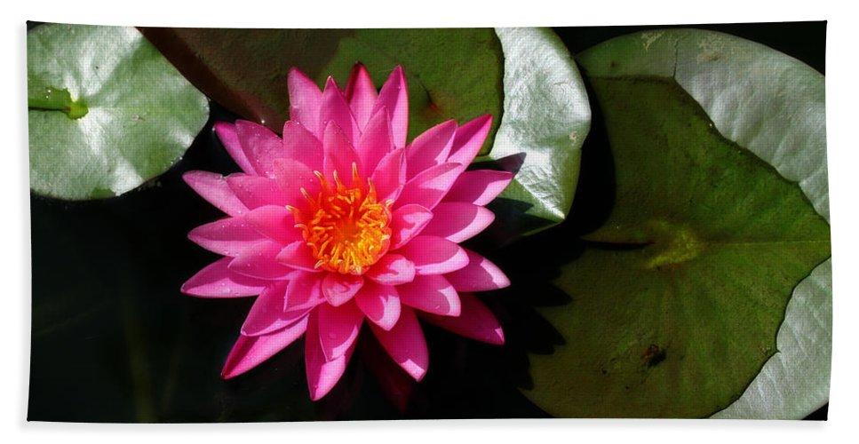 Corey Haynes Bath Sheet featuring the photograph Lotus by CE Haynes
