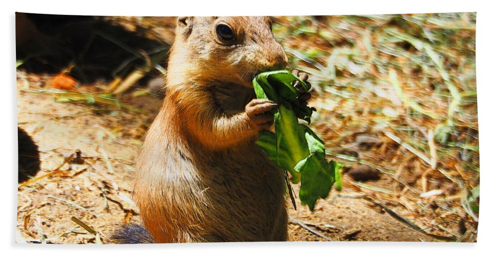 Prairie Dog Bath Sheet featuring the photograph Lunch Time by C H Apperson