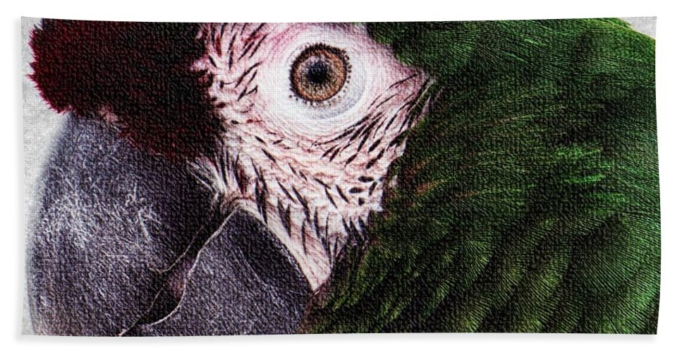 Green Macaw Hand Towel featuring the photograph Macaw by Lilliana Mendez
