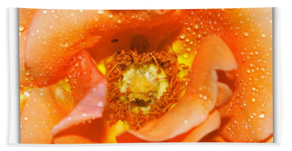 Rose Hand Towel featuring the photograph Macro Image Of A Rose by Stefano Senise