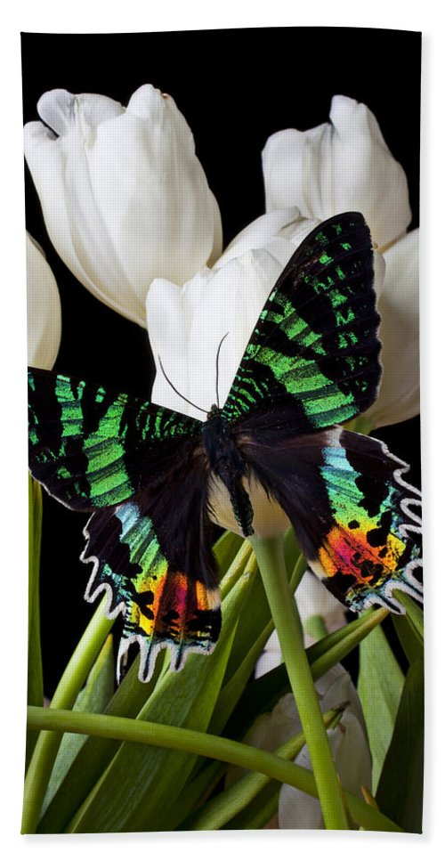 Madagascar Butterfly Bath Sheet featuring the photograph Madagascar Butterfly by Garry Gay