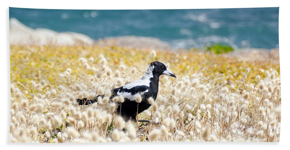 South Australia Bath Sheet featuring the photograph Magpie by Tim Hester