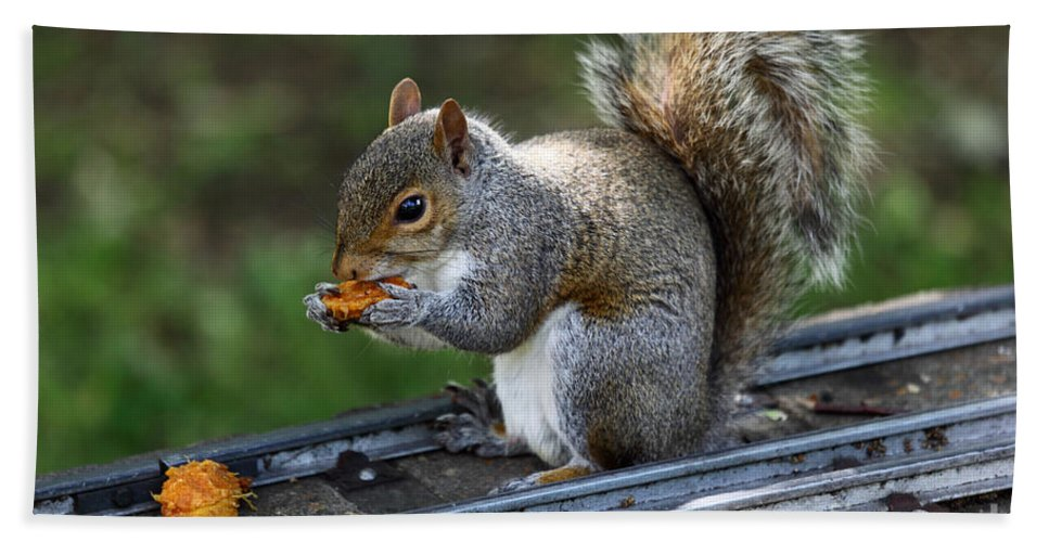 Squirrel Bath Sheet featuring the photograph Meals On Rails by James Brunker