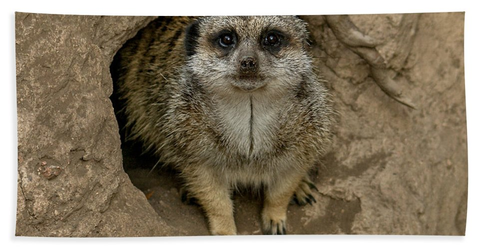 Meerkat Bath Sheet featuring the photograph Meerkat by Ernie Echols