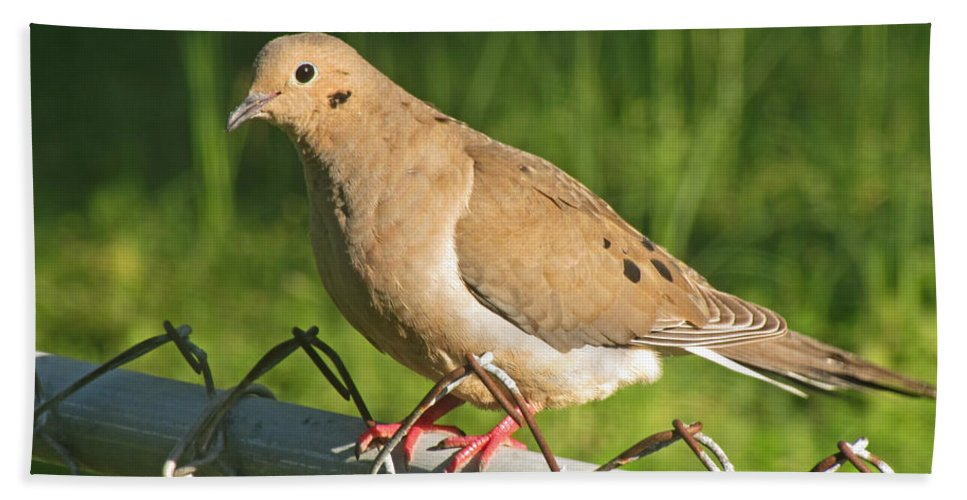 Nature Bath Sheet featuring the photograph Morning Dove I by Debbie Portwood