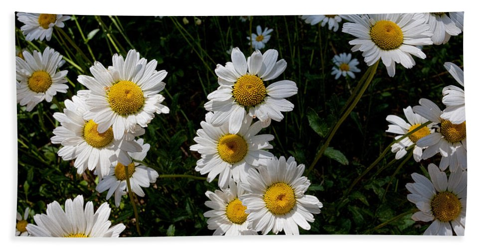Wild Daisies Photograph Hand Towel featuring the photograph Mountain Daisies by Jim Garrison
