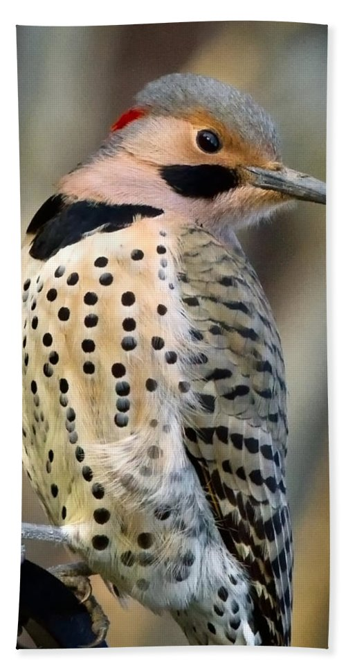 Northern Flicker Bath Sheet featuring the photograph Northern Flicker by Bill Wakeley
