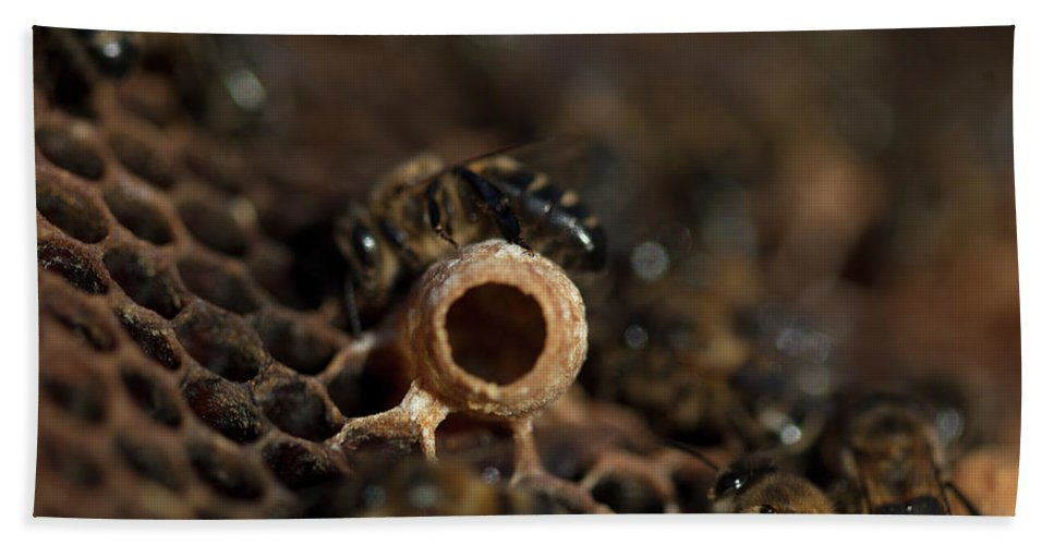Worker Bees Bath Towel featuring the photograph Nurse Bees Take Care Of A Queen Bee Egg by Chico Sanchez