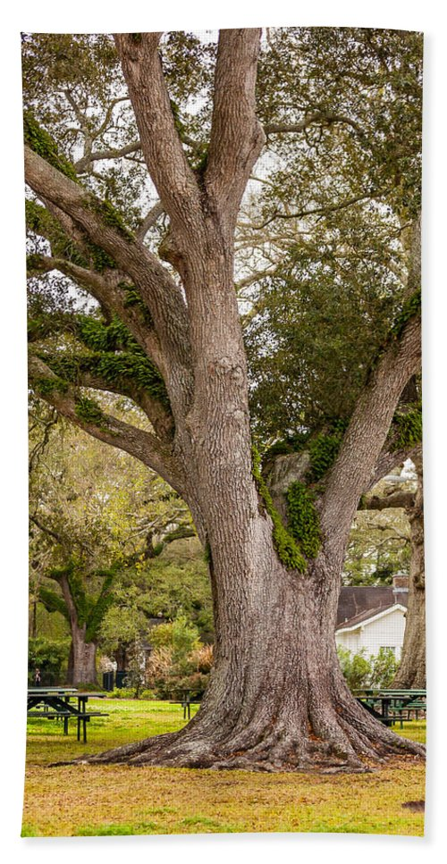 Oak Alley Plantation Hand Towel featuring the photograph Oak Alley Backyard by Steve Harrington