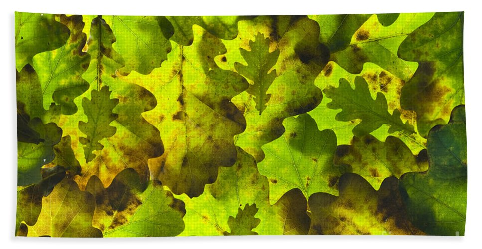 Background Hand Towel featuring the photograph Oak Leaf Background by Lee Avison