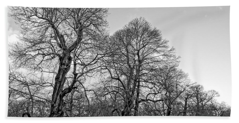 Black And White Hand Towel featuring the photograph Old Trees by Roy Pedersen
