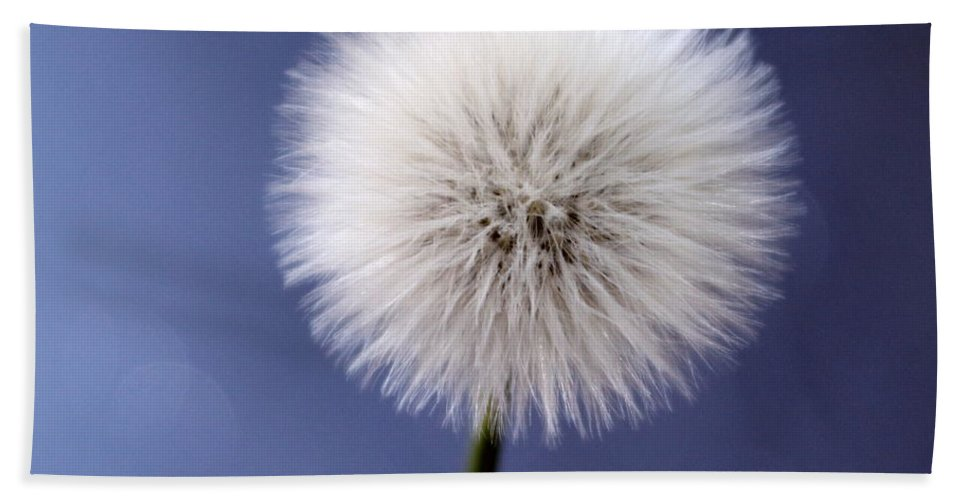 Dandelion Bath Sheet featuring the photograph Once Upon A Wish by Krissy Katsimbras